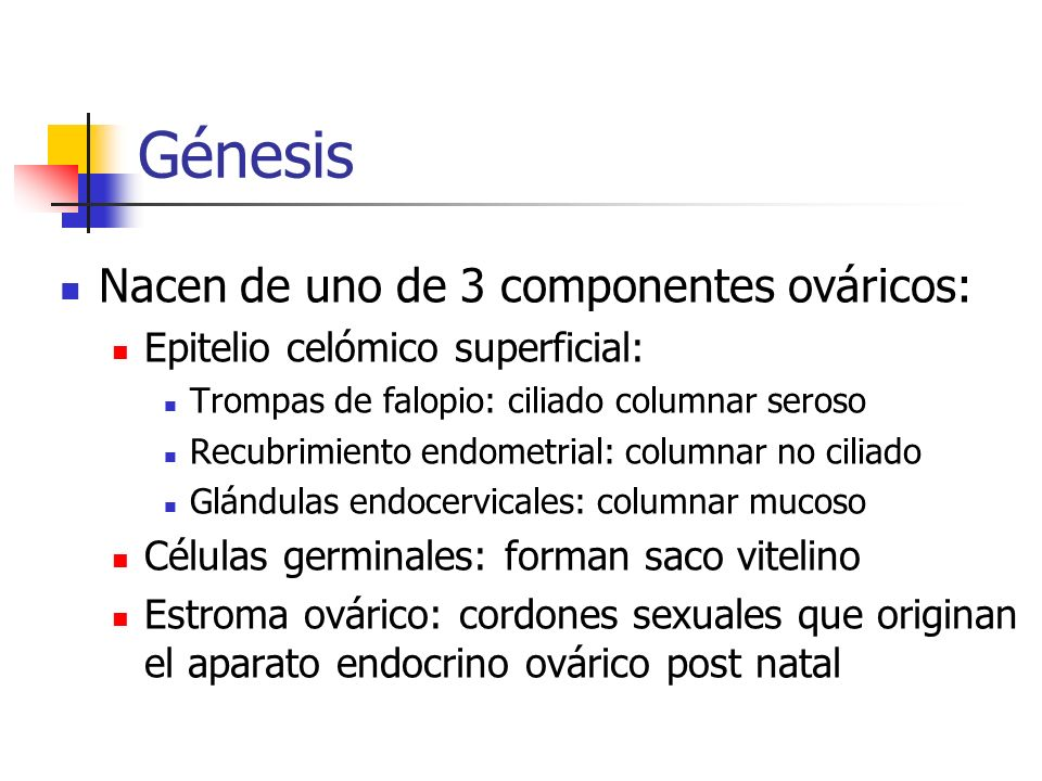 Génesis Nacen de uno de 3 componentes ováricos: