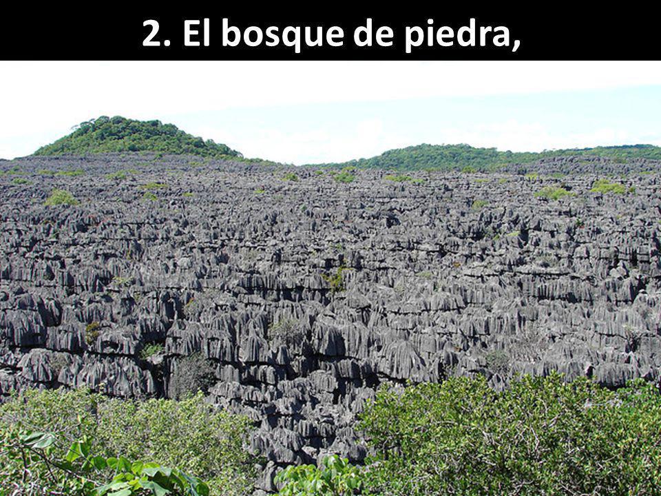 2. El bosque de piedra, Madagascar