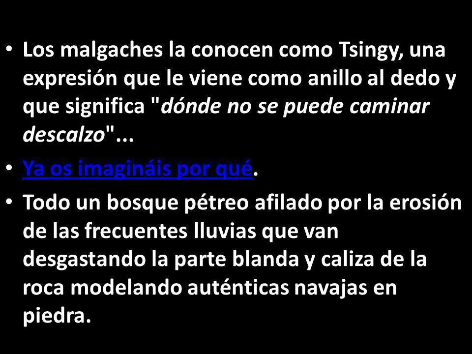 Los malgaches la conocen como Tsingy, una expresión que le viene como anillo al dedo y que significa dónde no se puede caminar descalzo ...