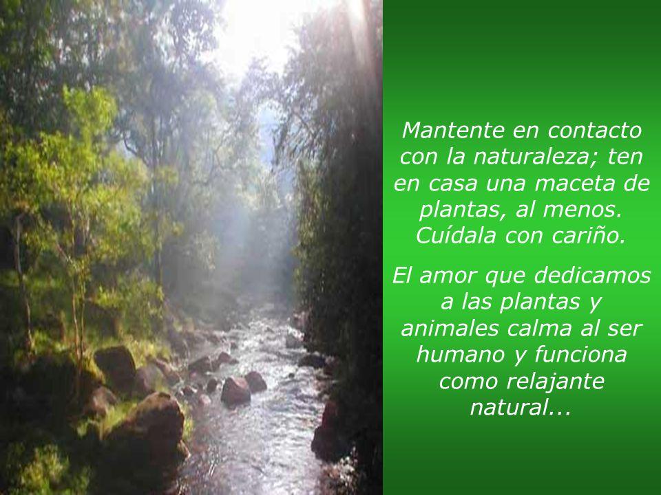 Mantente en contacto con la naturaleza; ten en casa una maceta de plantas, al menos. Cuídala con cariño.