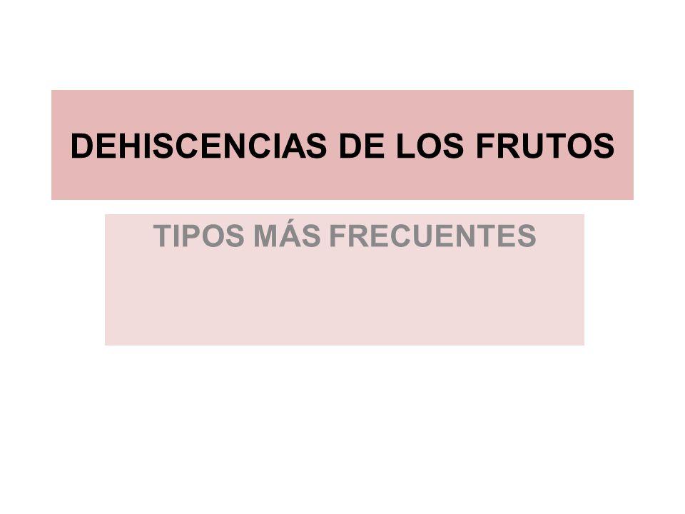 DEHISCENCIAS DE LOS FRUTOS