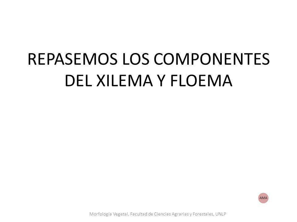 REPASEMOS LOS COMPONENTES DEL XILEMA Y FLOEMA