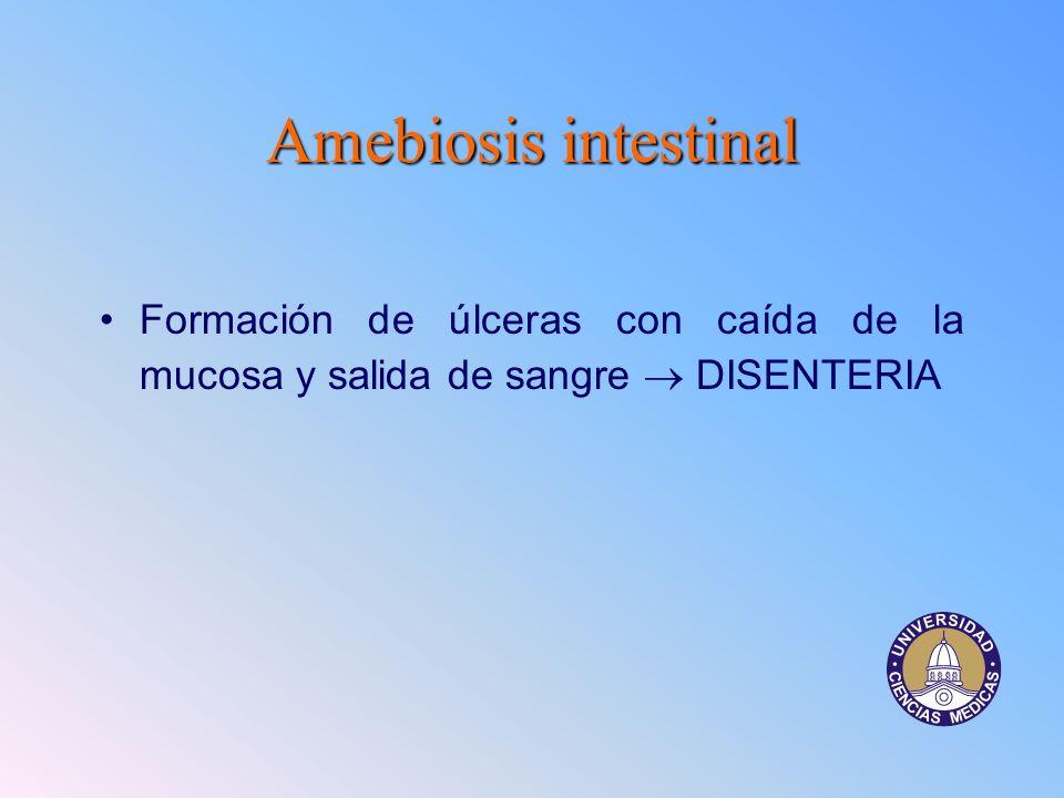 Amebiosis intestinal Formación de úlceras con caída de la mucosa y salida de sangre  DISENTERIA