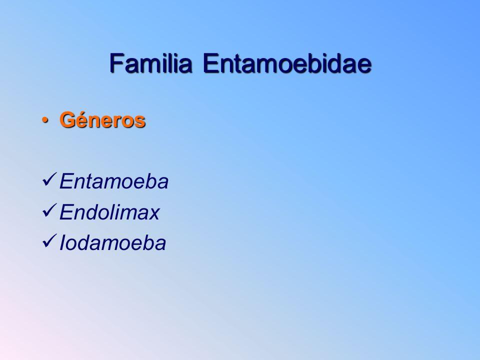 Familia Entamoebidae Géneros Entamoeba Endolimax Iodamoeba