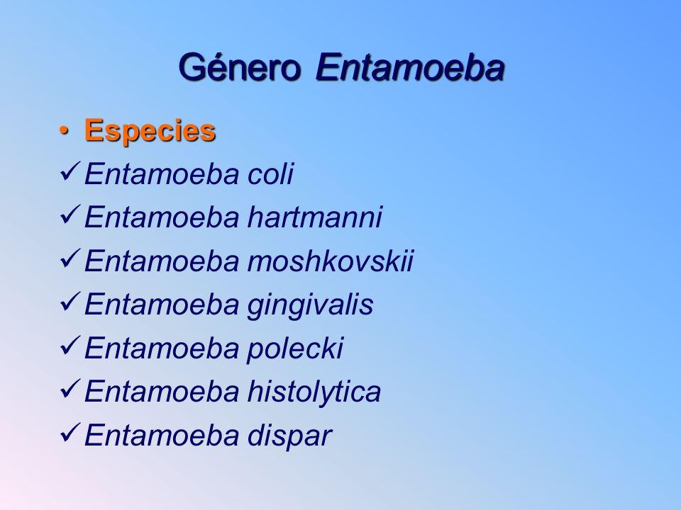 Género Entamoeba Especies Entamoeba coli Entamoeba hartmanni