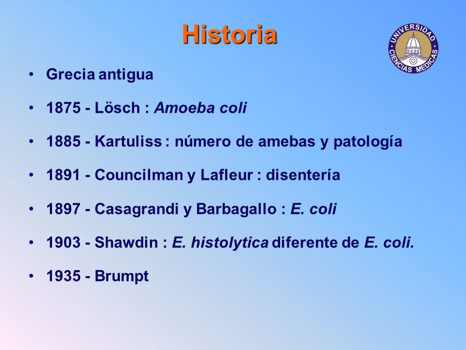 Historia Grecia antigua 1875 - Lösch : Amoeba coli
