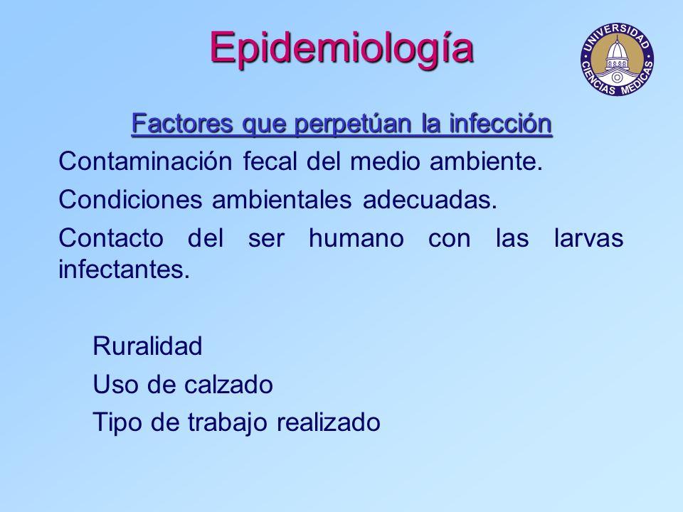 Factores que perpetúan la infección