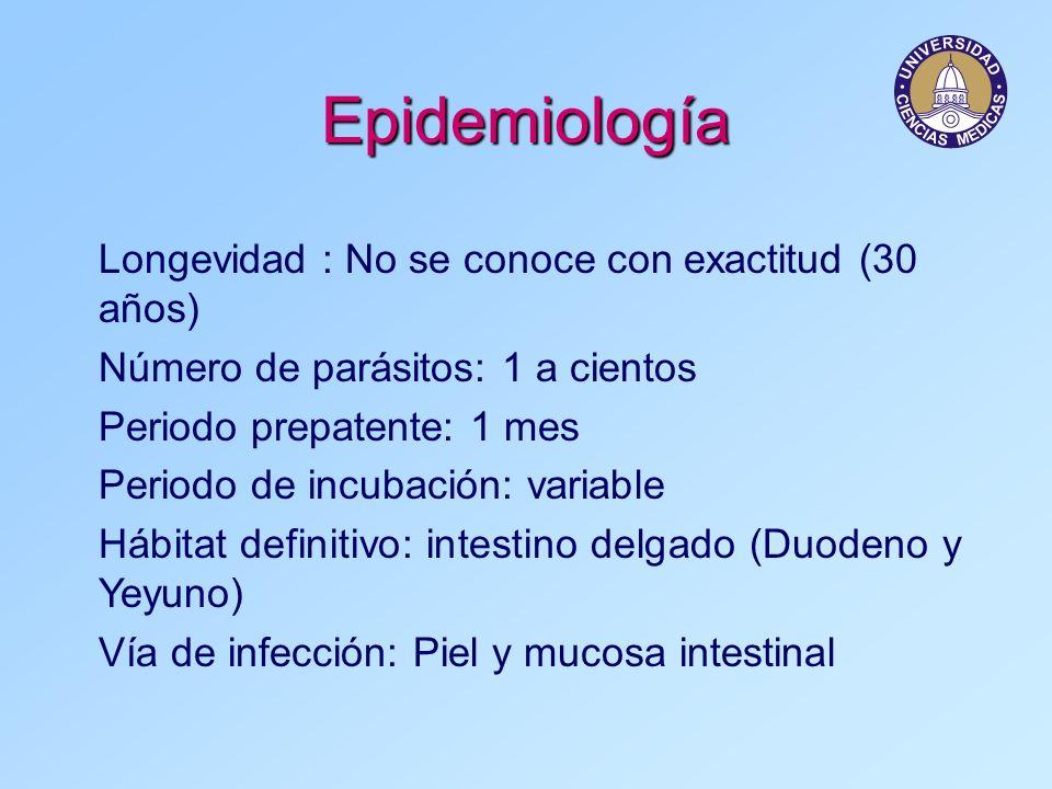 Epidemiología Longevidad : No se conoce con exactitud (30 años)
