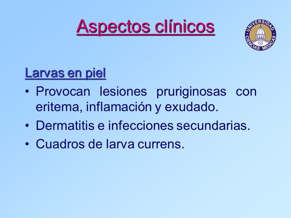 Aspectos clínicos Larvas en piel