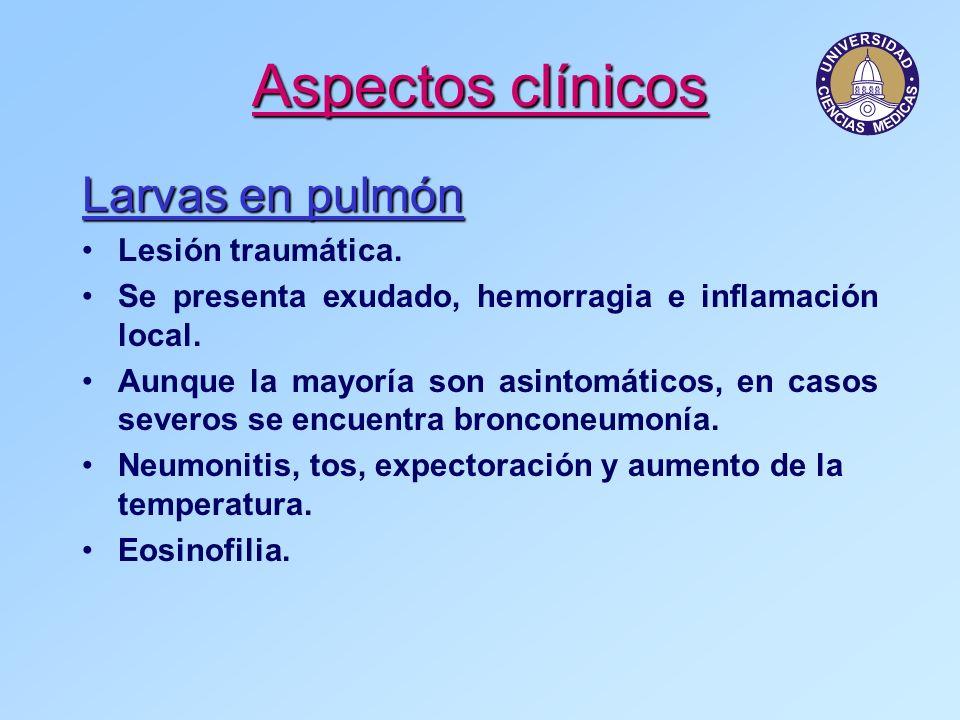 Aspectos clínicos Larvas en pulmón Lesión traumática.