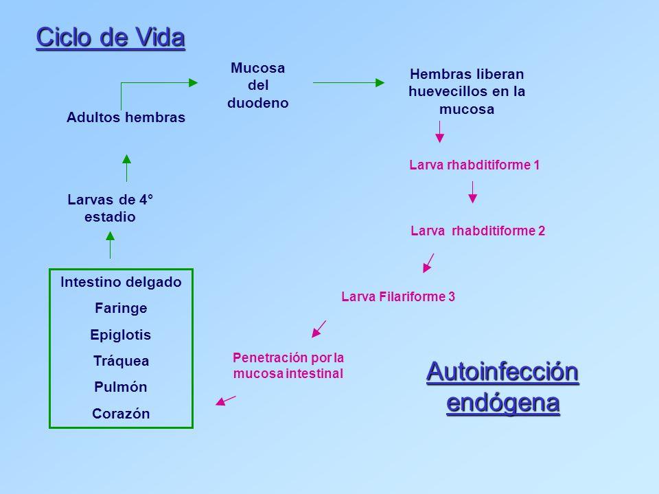 Autoinfección endógena