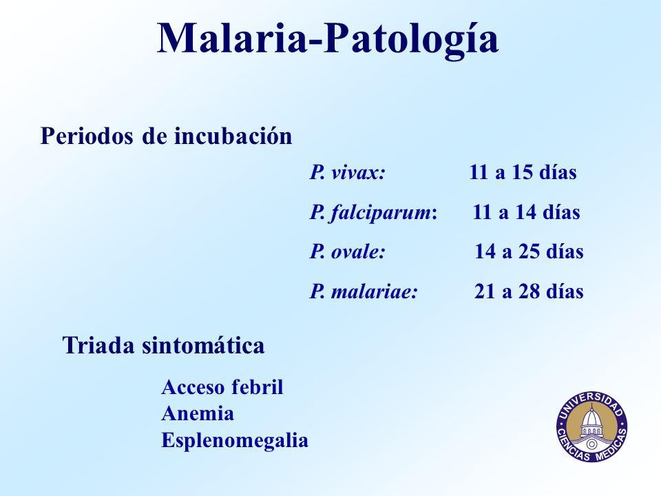Malaria-Patología Periodos de incubación Triada sintomática