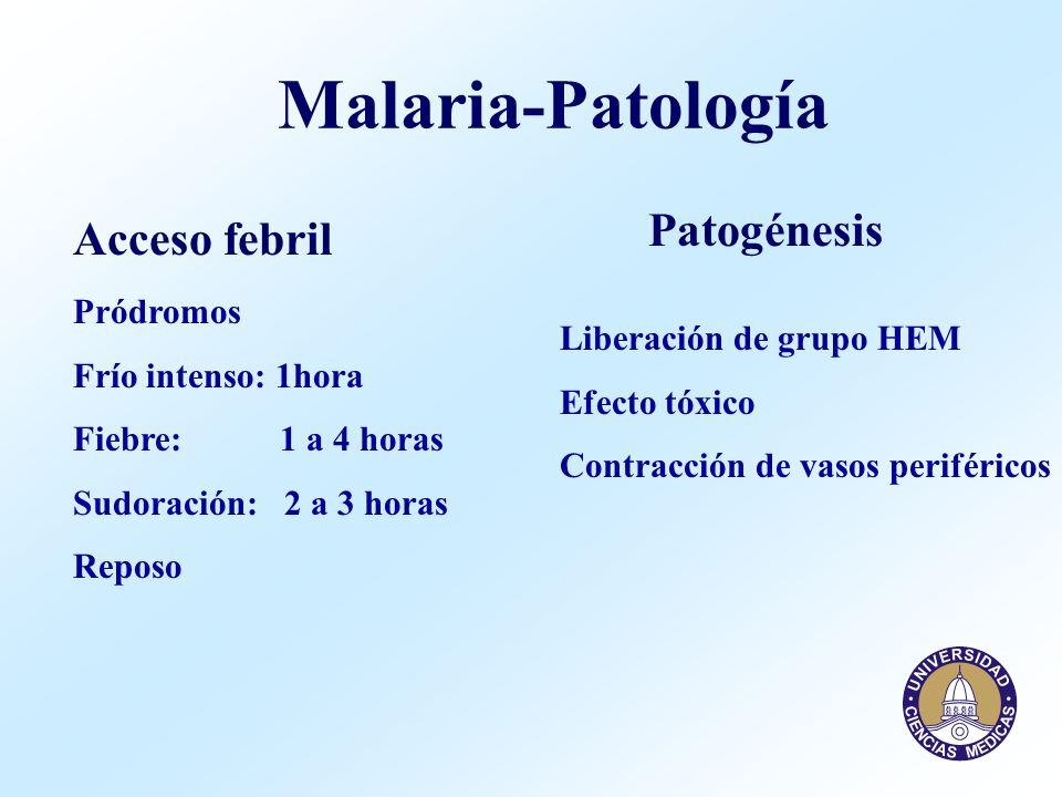 Malaria-Patología Patogénesis Acceso febril Pródromos