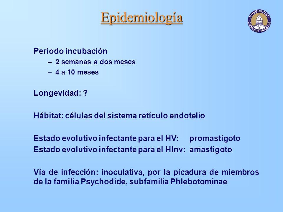 Epidemiología Periodo incubación Longevidad: