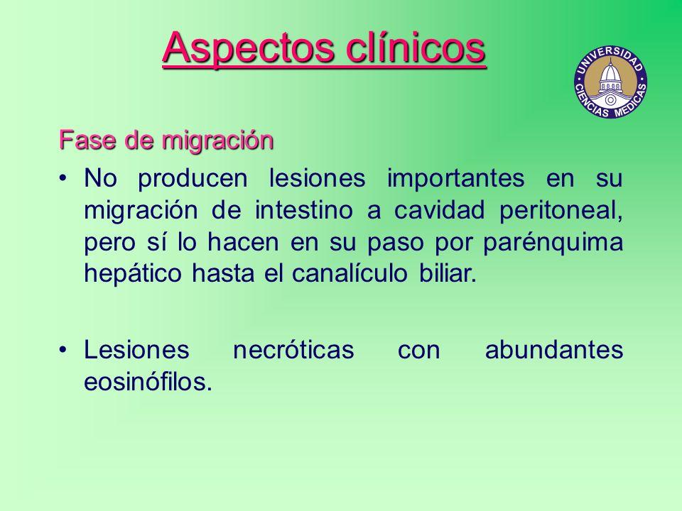 Aspectos clínicos Fase de migración