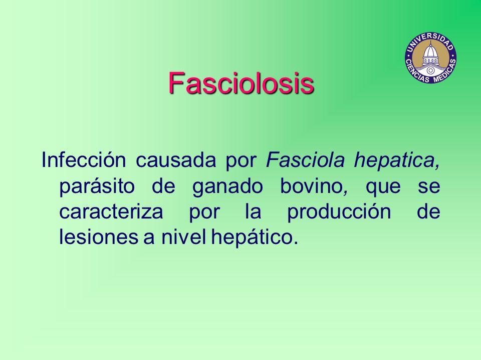 FasciolosisInfección causada por Fasciola hepatica, parásito de ganado bovino, que se caracteriza por la producción de lesiones a nivel hepático.