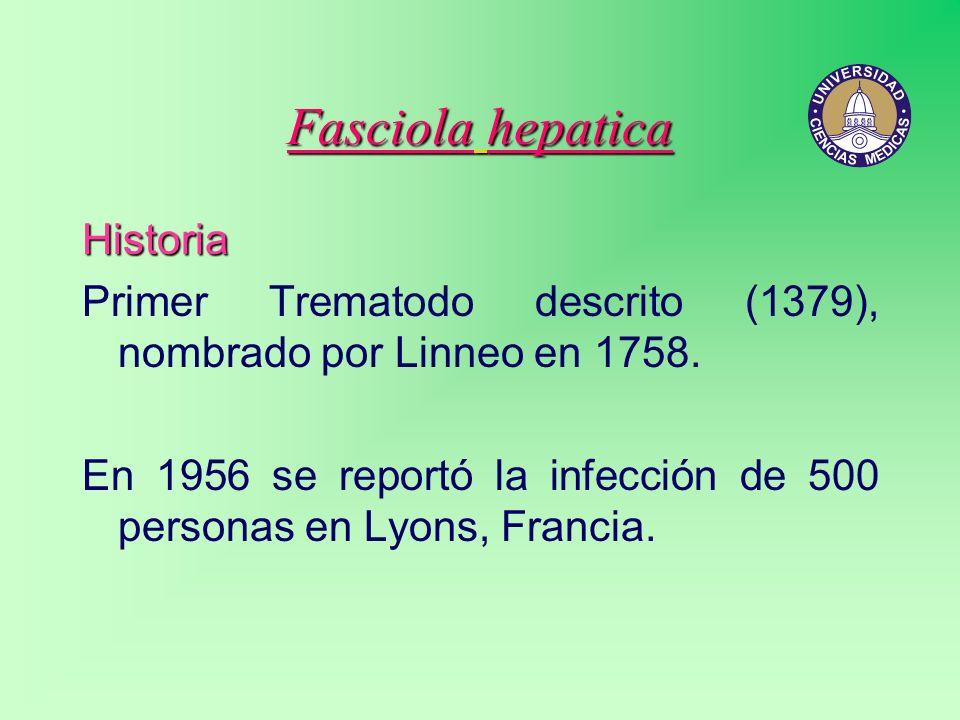 Fasciola hepatica Historia