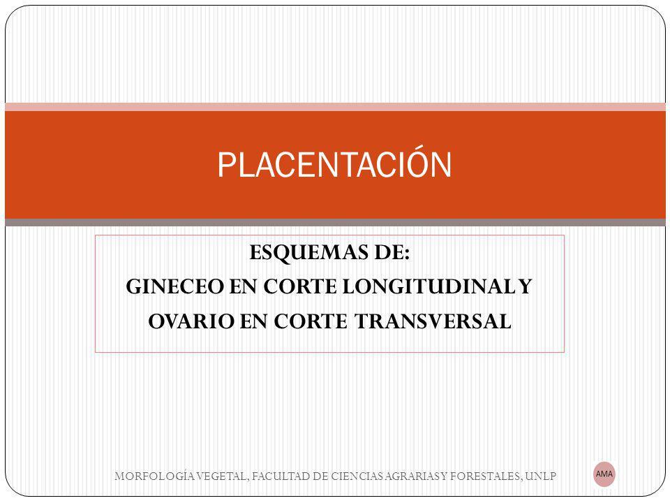 GINECEO EN CORTE LONGITUDINAL Y OVARIO EN CORTE TRANSVERSAL