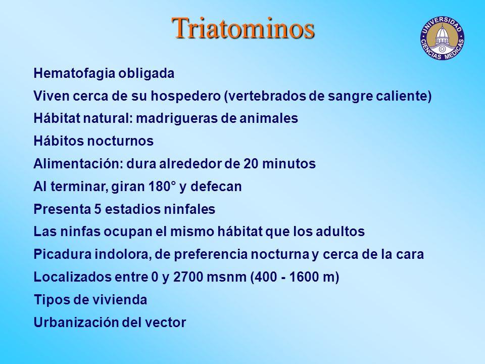 Triatominos Hematofagia obligada