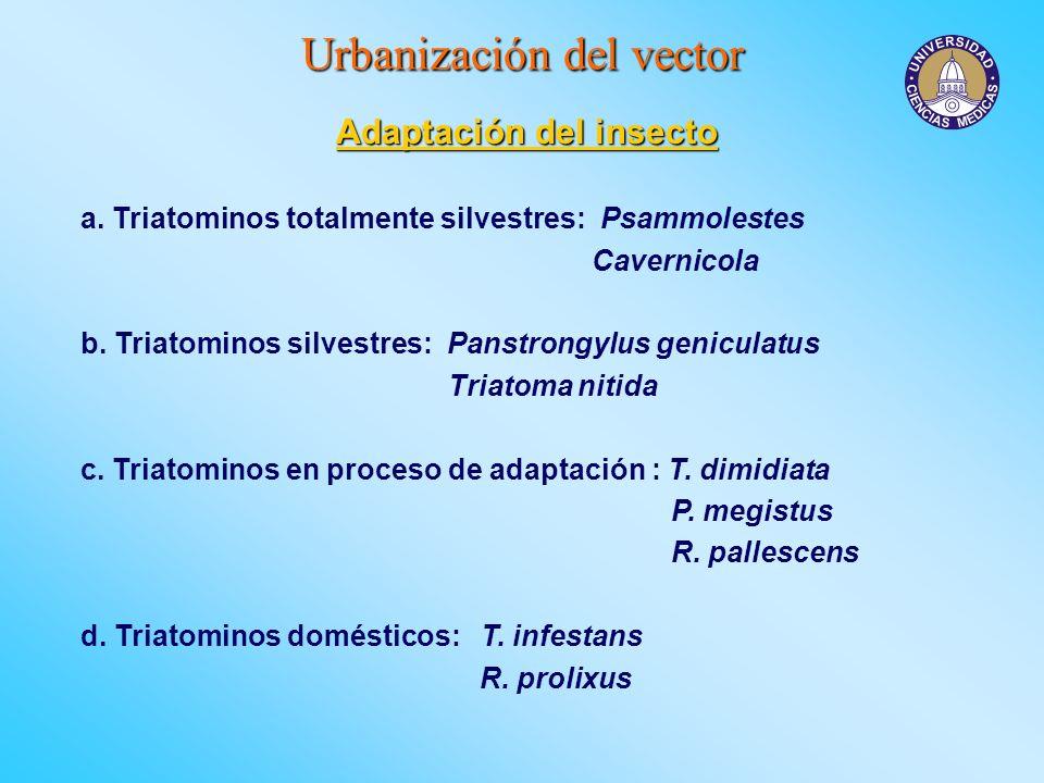 Urbanización del vector