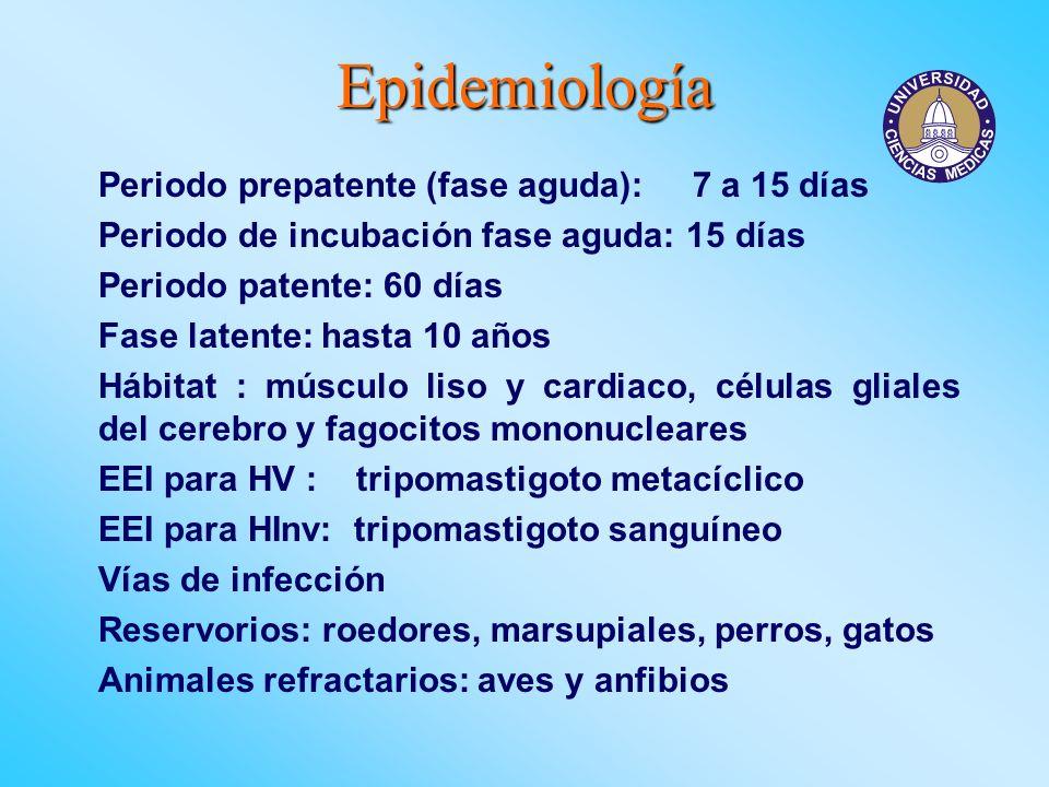 Epidemiología Periodo prepatente (fase aguda): 7 a 15 días