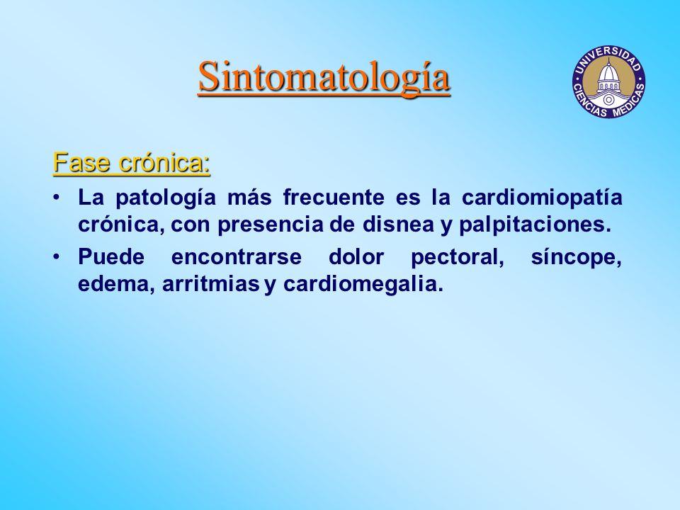 Sintomatología Fase crónica: