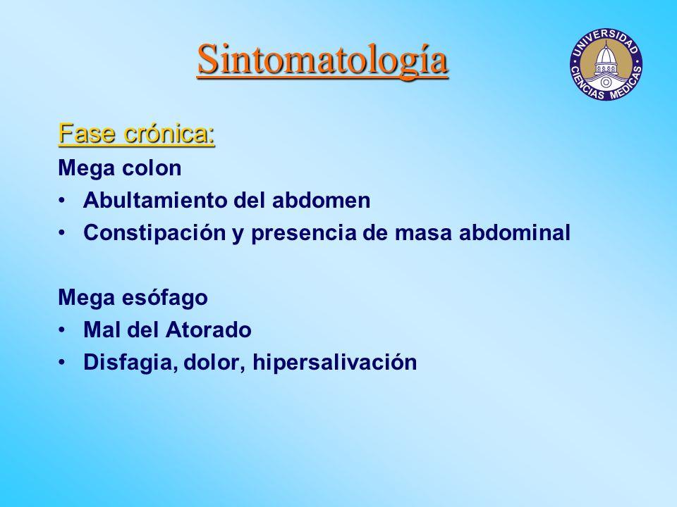Sintomatología Fase crónica: Mega colon Abultamiento del abdomen