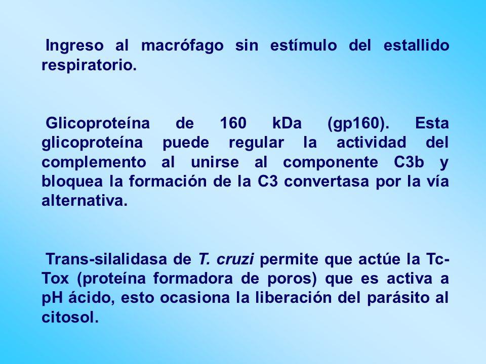 Ingreso al macrófago sin estímulo del estallido respiratorio.