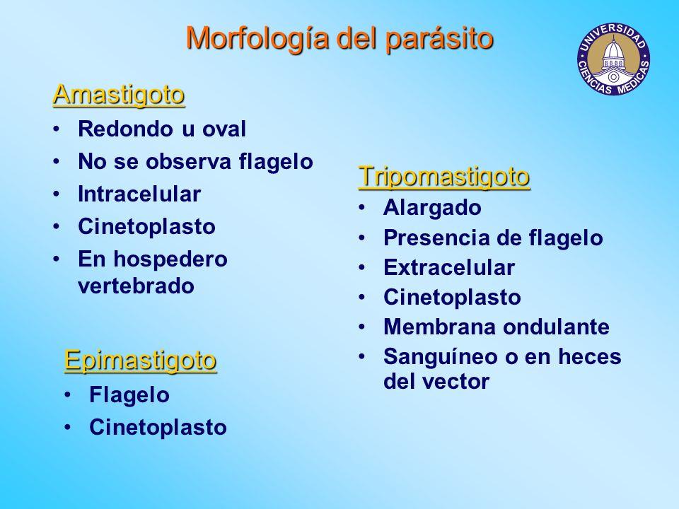 Morfología del parásito