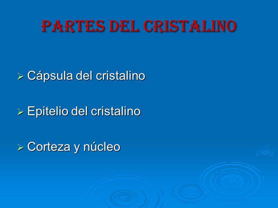 PARTES DEL CRISTALINO Cápsula del cristalino Epitelio del cristalino