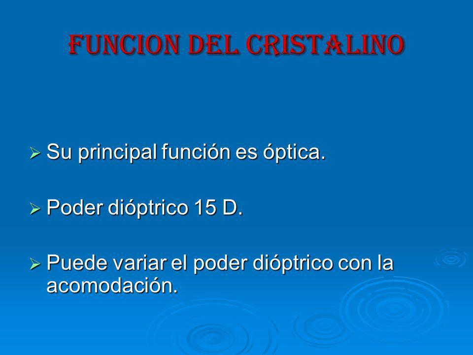 FUNCION DEL CRISTALINO