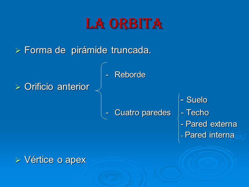 LA ORBITA Forma de pirámide truncada. Orificio anterior - Suelo