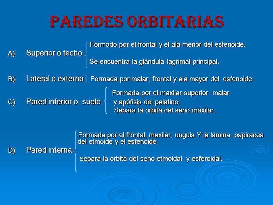 PAREDES ORBITARIAS Formado por el frontal y el ala menor del esfenoide. A) Superior o techo. Se encuentra la glándula lagrimal principal.