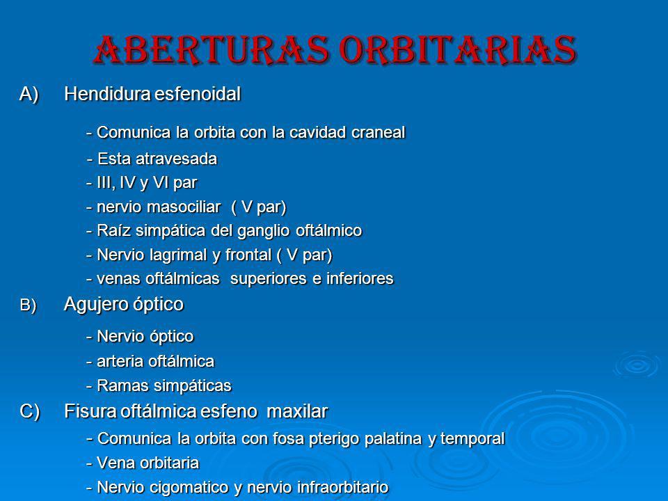 ABERTURAs ORBITARIAS - Comunica la orbita con la cavidad craneal