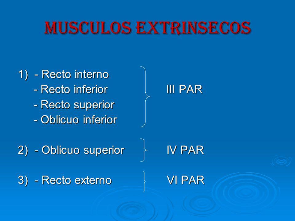 MUSCULOS EXTRINSECOS 1) - Recto interno - Recto inferior III PAR