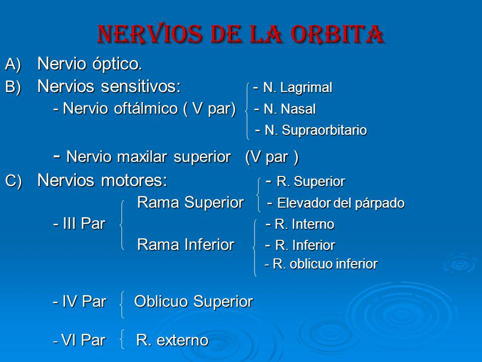 NERVIOS DE LA ORBITA A) Nervio óptico.