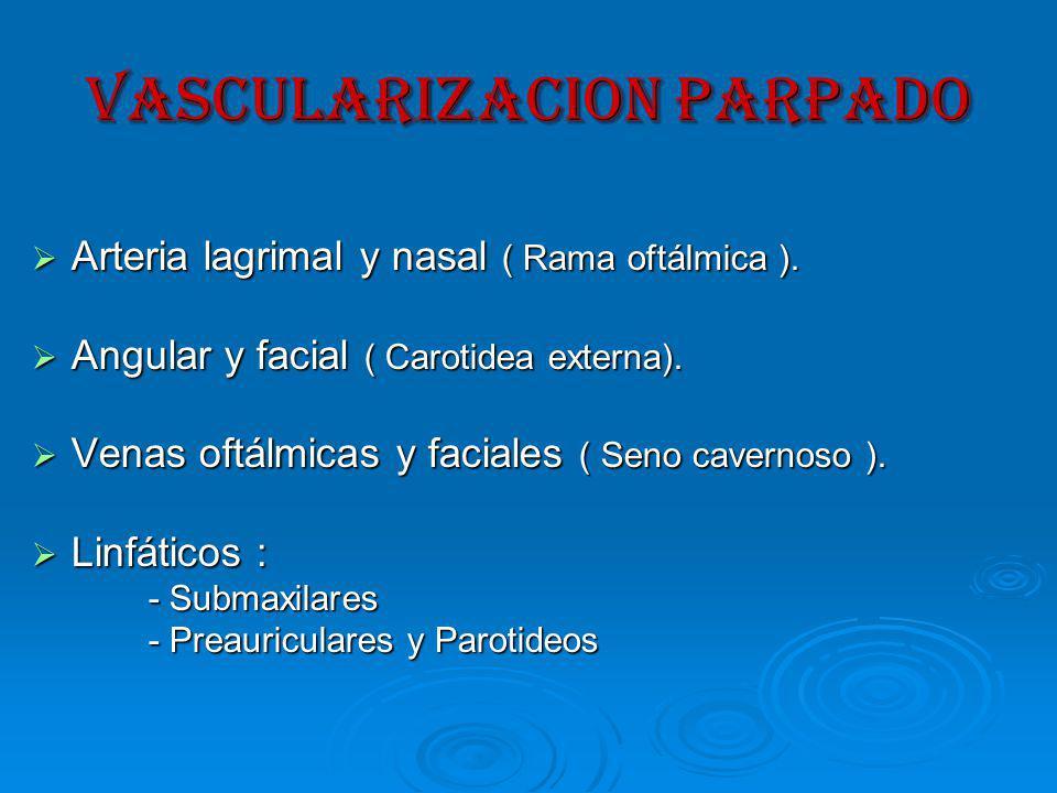 VASCULARIZACION PARPADO