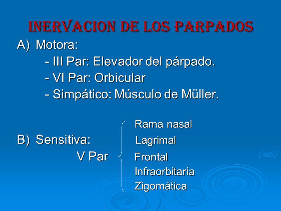 INervacion DE LOS PARPADOS