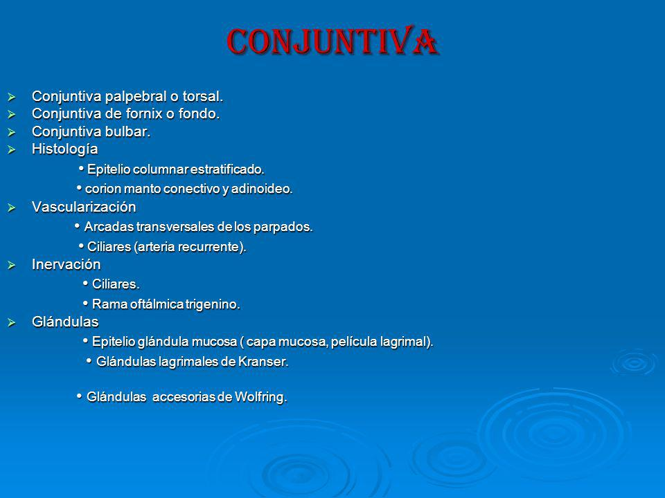 CONJUNTIVA • Epitelio columnar estratificado.