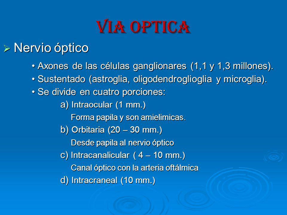 VIA OPTICA Nervio óptico