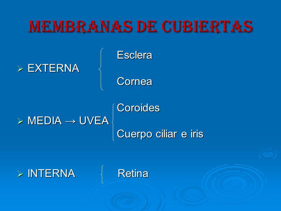 MEMBRANAS DE CUBIERTAS