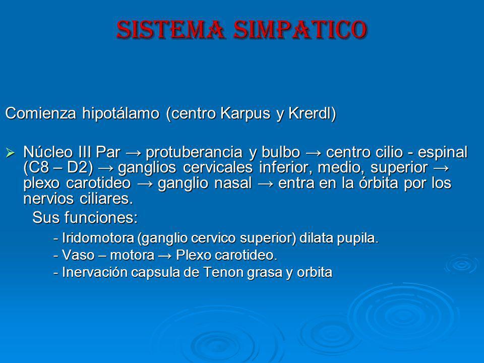 SISTEMA SIMPATICO Comienza hipotálamo (centro Karpus y Krerdl)