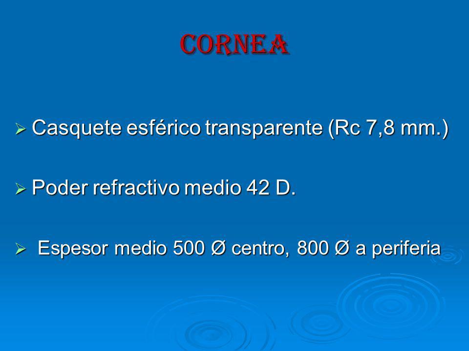 CORNEA Casquete esférico transparente (Rc 7,8 mm.)
