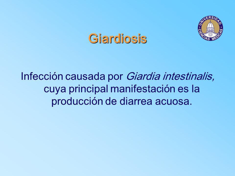 GiardiosisInfección causada por Giardia intestinalis, cuya principal manifestación es la producción de diarrea acuosa.