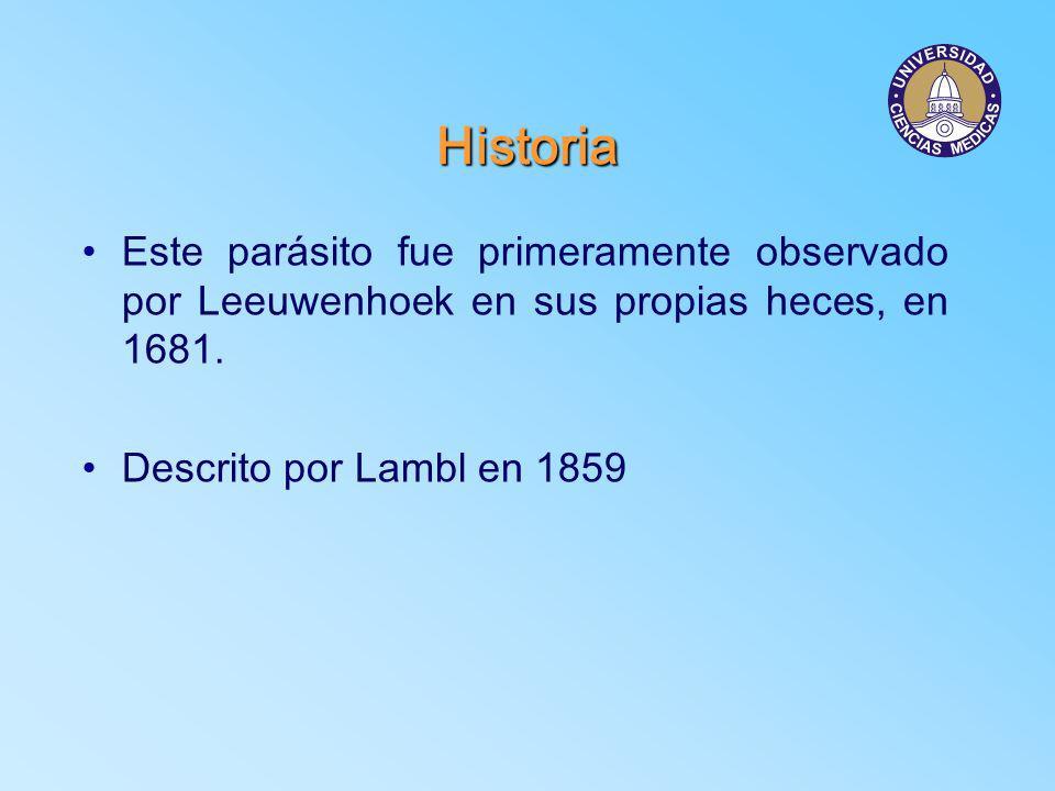 HistoriaEste parásito fue primeramente observado por Leeuwenhoek en sus propias heces, en 1681.