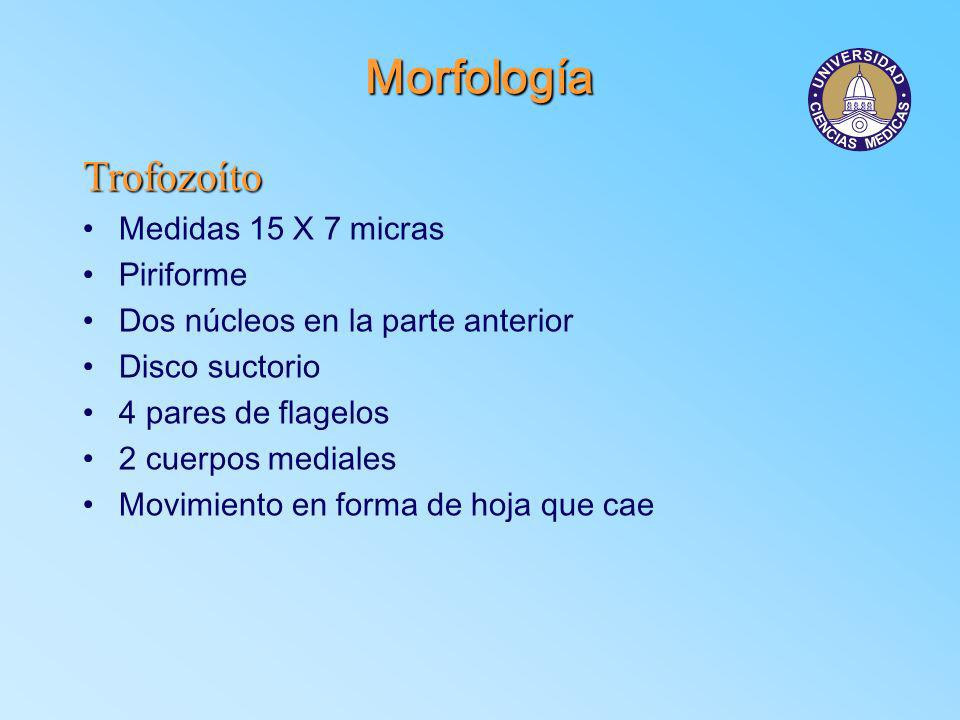 Morfología Trofozoíto Medidas 15 X 7 micras Piriforme