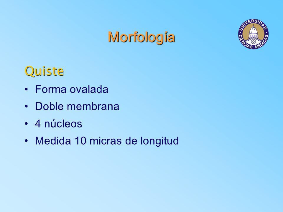 Morfología Quiste Forma ovalada Doble membrana 4 núcleos