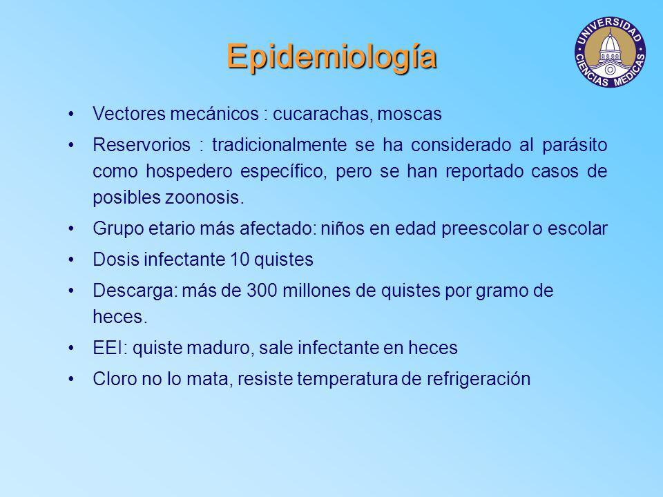 Epidemiología Vectores mecánicos : cucarachas, moscas