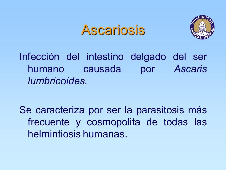 Ascariosis Infección del intestino delgado del ser humano causada por Ascaris lumbricoides.