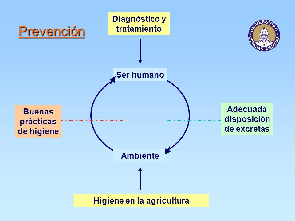 Prevención Diagnóstico y tratamiento Ser humano